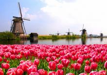Holiday rentals in Holland
